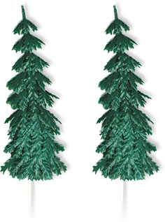 Evergreen Tree - Large - Pl.