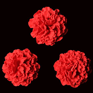 Carnation Flowers - Red